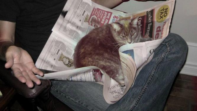 kattidning-puff