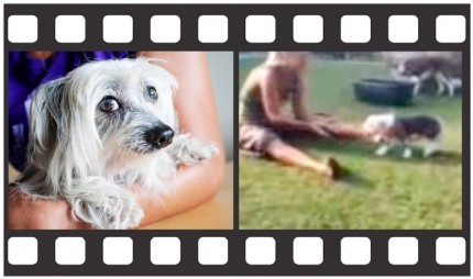 Nakenhunden-Bosse