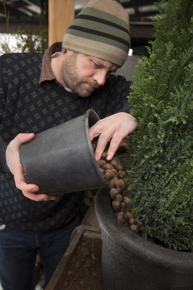 Henrik fyller upp med lecakulor runt Cypress