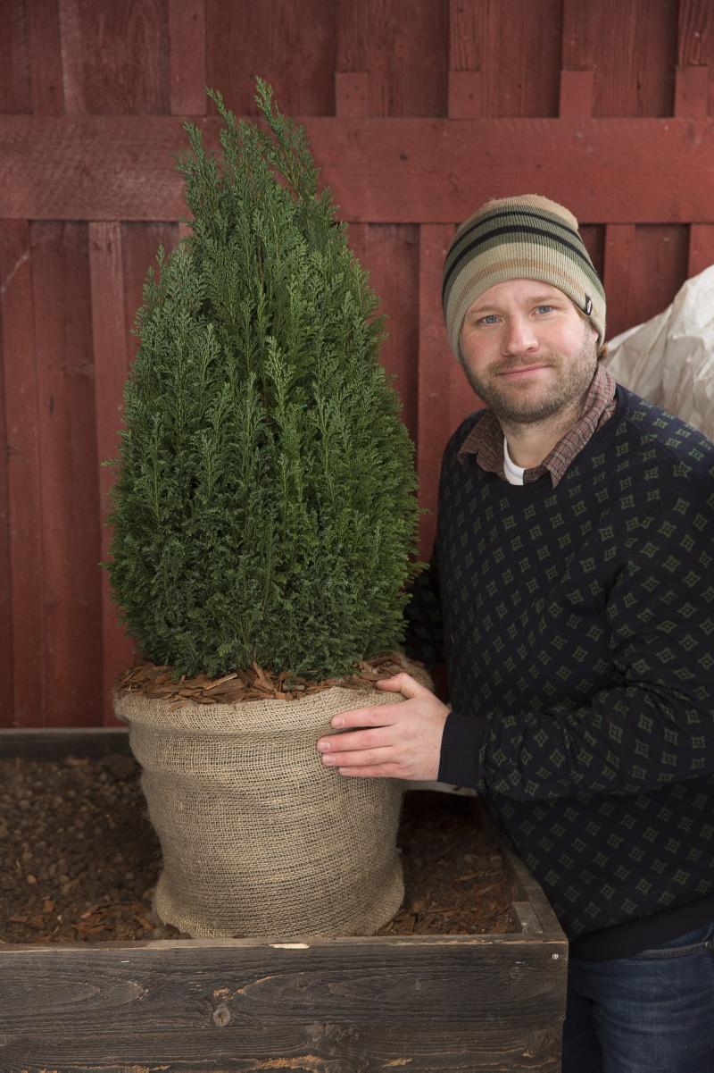 Henrik har vintersäkrat Cypress