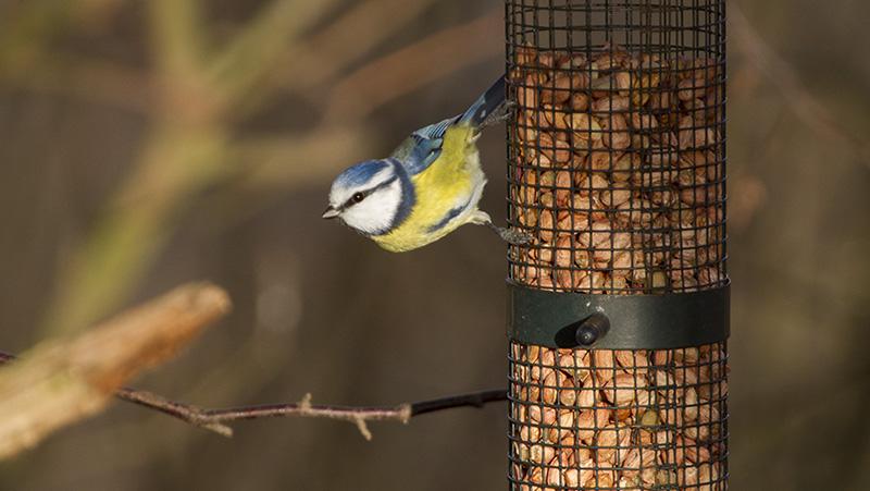 mata fåglar i bostadsområden
