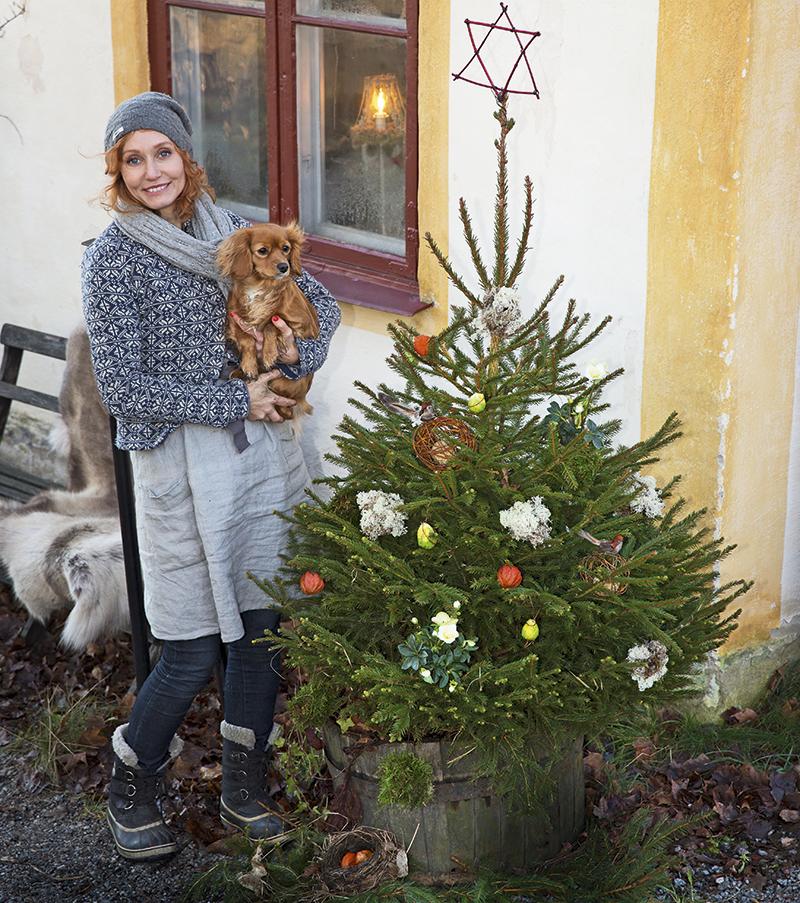 Linda Schilén gillar en naturlig jul. Den gulliga julgranen har en stjärna av kornellkvistar som surrats samman. Granen är dekorerad av bland annat mossbollar, brysselkålskulor och julrosor.