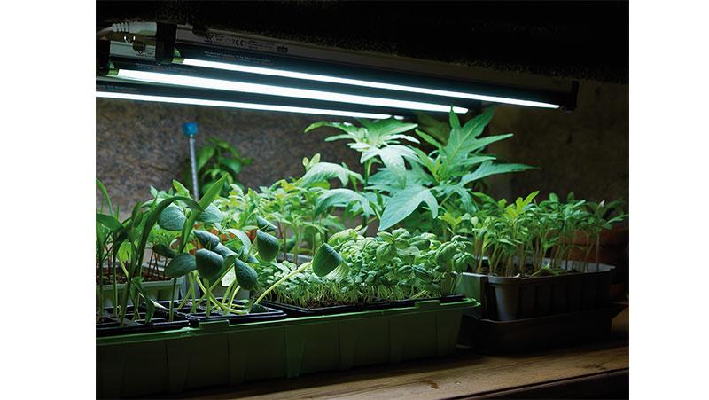 växtbelysning clas ohlson