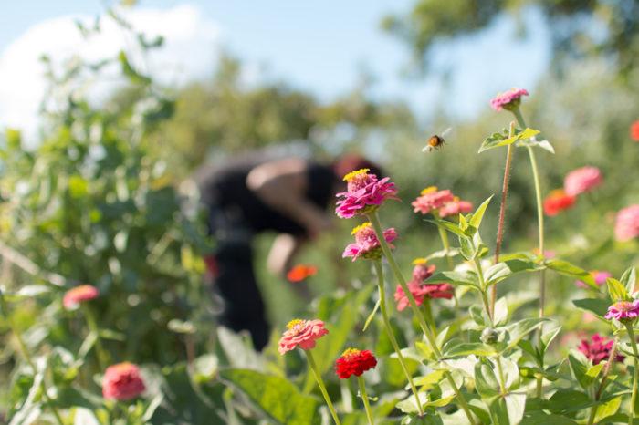 Blommor och ett flygande bi.