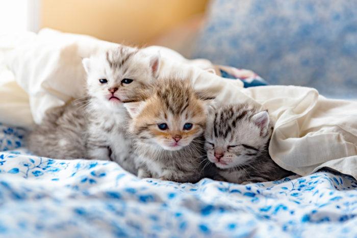 tre kattungar i motljus