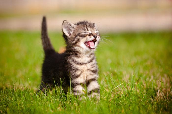 en kattunge på en gräsmatta