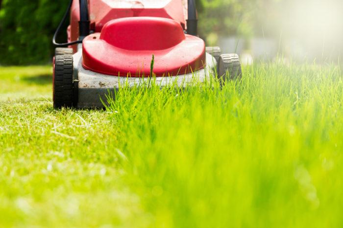 Röd gräsklippare klipper gräs.