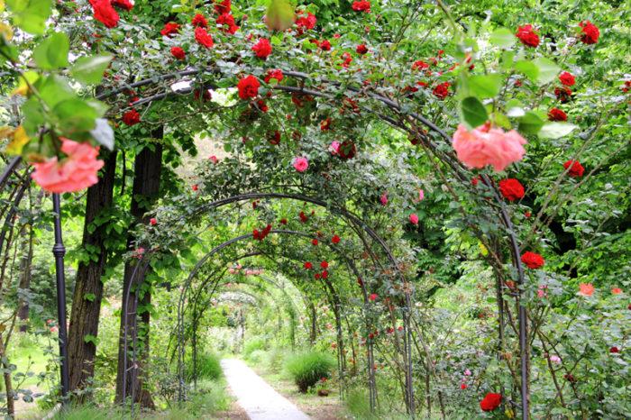 Trädgård med rosor.