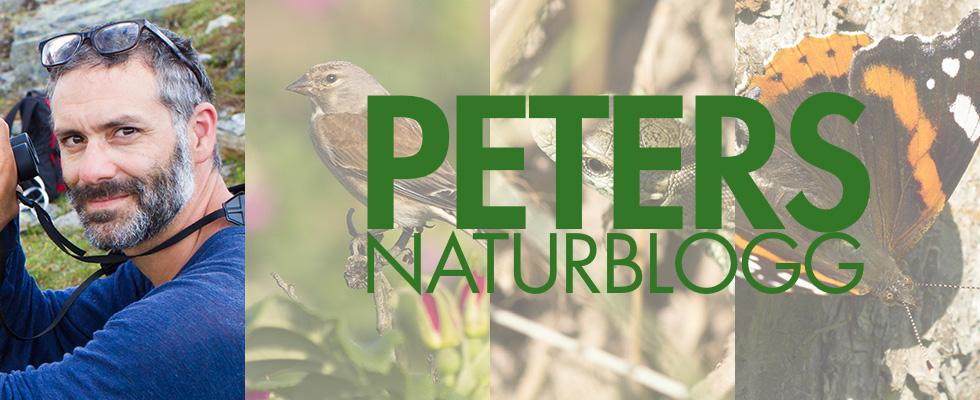 bild på Peters Naturblogg