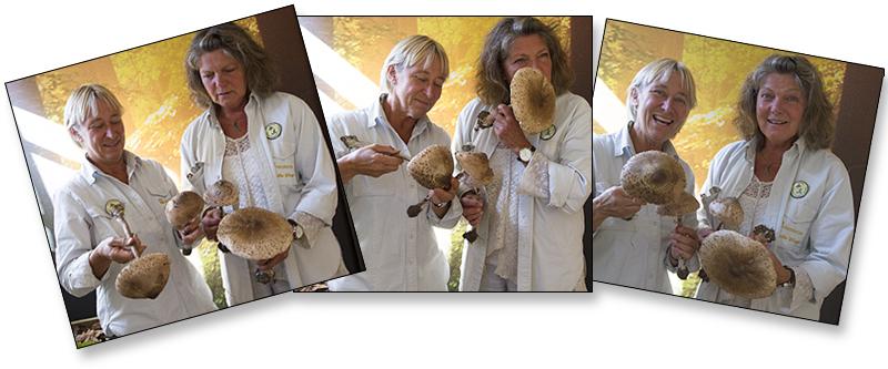 Fredriksdals svampguider