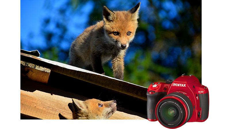 rävungar allers fototävling