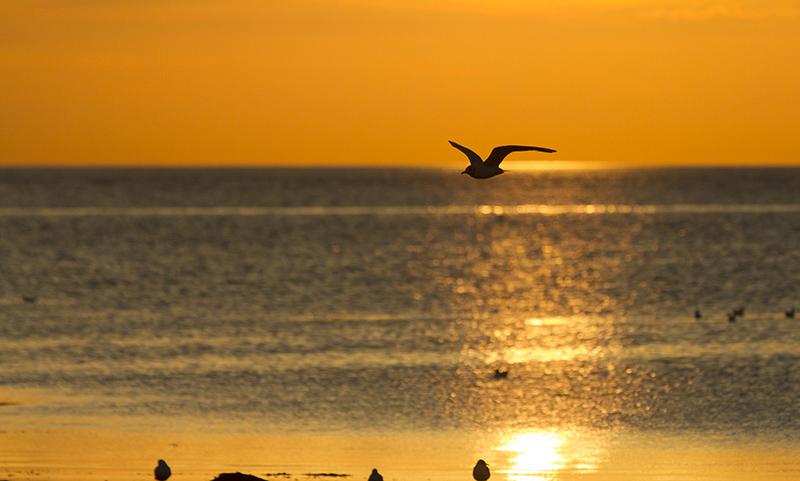 Fågel i solnedgång