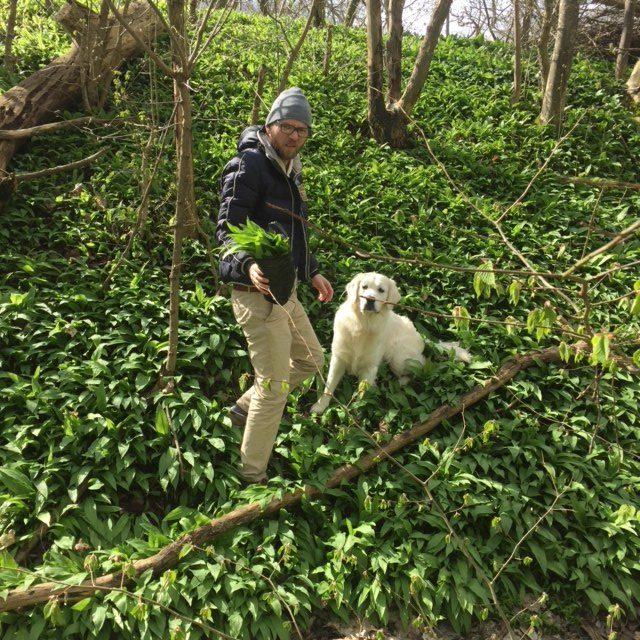 Ätbart ogräs! Nässlor, älgört, ramslök, maskros eller kirskål! Vilket ogräs stoppar du helst i munnen? Jag älskar ramslök. På bilden ser du min sambo Daniel och min hund Nisse när vi plockade ramslök i Lövestad i fjol.