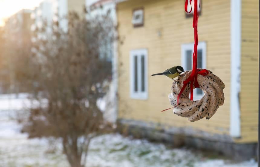 hemgjord fågelmat