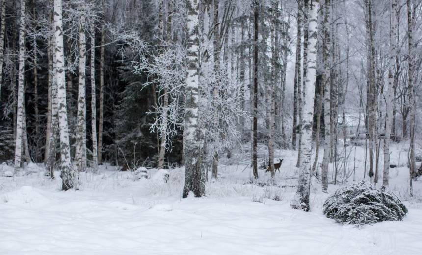 Hofors i snö