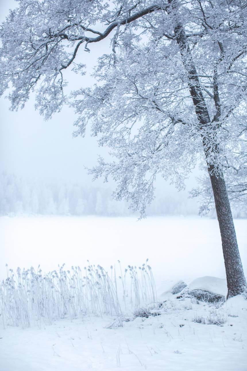 Fina snöbilder